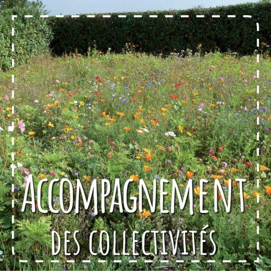 Accompagnement des collectivités vers un développement durable