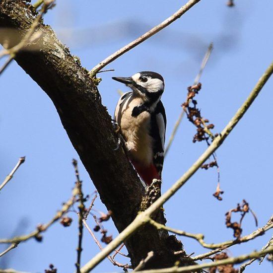 Chant d'oiseaux-BGillot