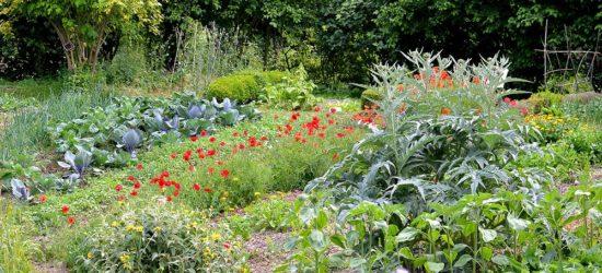 Jardin au naturel vue generale-BGillot