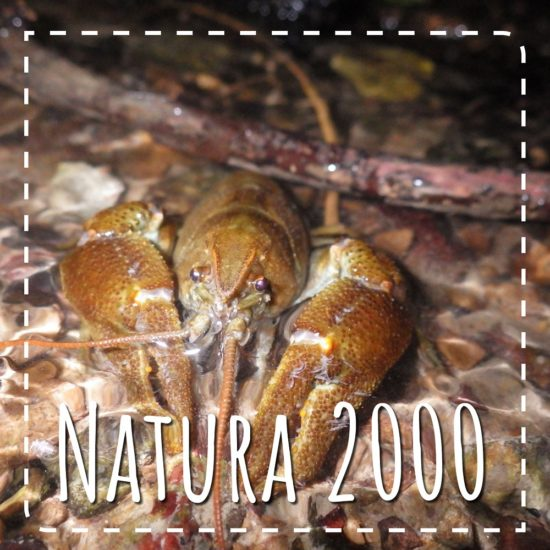 Le CPIE animateur Natura 2000