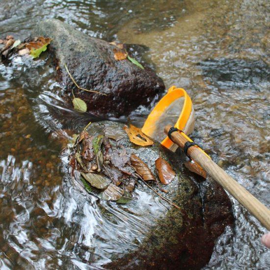 Sortie nature sur les petites betes de l'eau-MJourdan