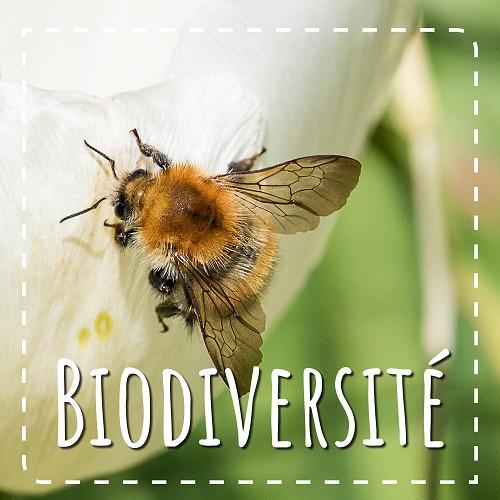 Biodiversite avec le CPIE 61