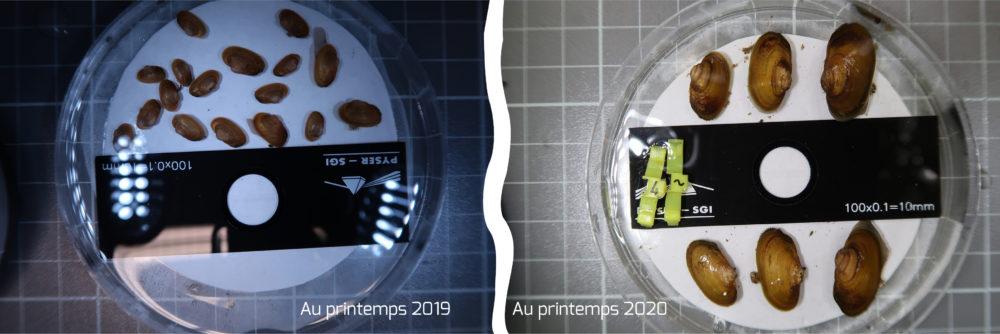 Mulettes sur la Rouvre 2019-2020